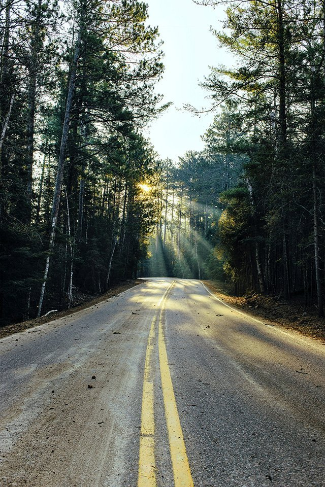 Forest Hwy